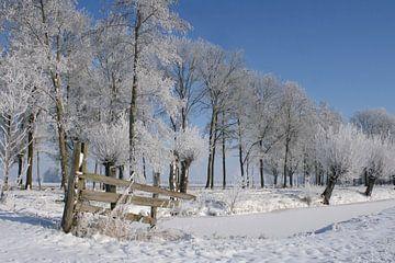 Sneeuwwit van Yvonne Blokland