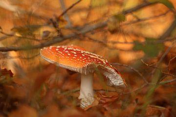 Paddenstoel herfst kleuren van Wilma Meurs