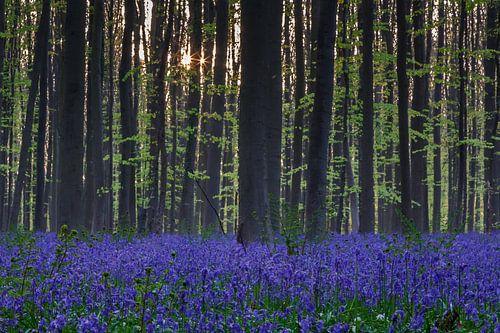 Sunrise in the forest von Menno Schaefer