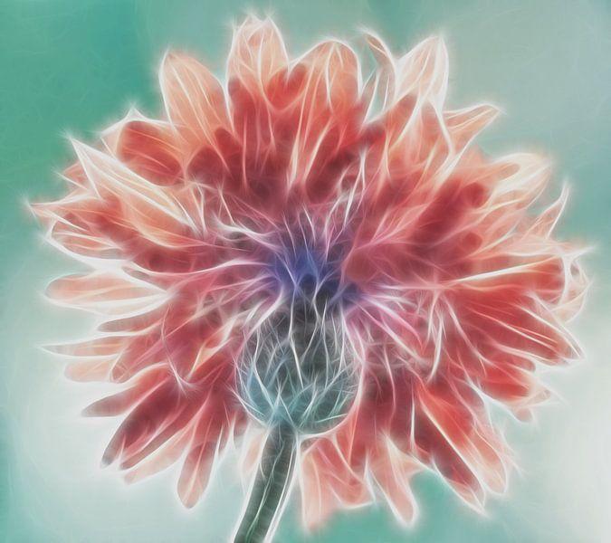 Kornblume fraktale von Marion Tenbergen