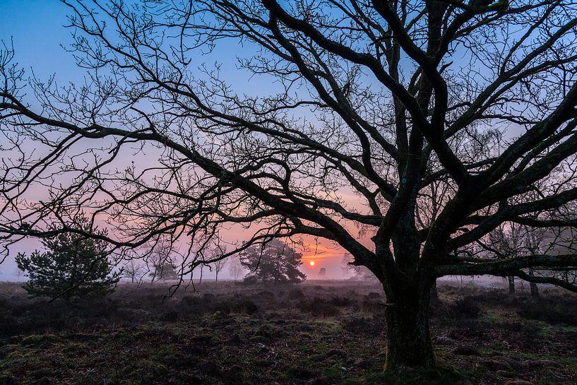Early sunrise van Wilma Wijnen