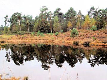 Prachtige herfstkleuren langs het water. van Il se