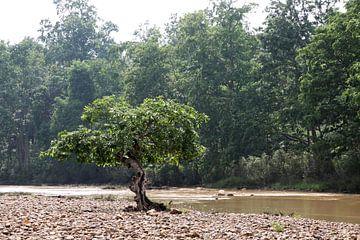 Eenzame boom in rivierbedding van Cora Unk