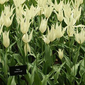 Fleurs dans une belle floraison sur Jennifer Hendriks