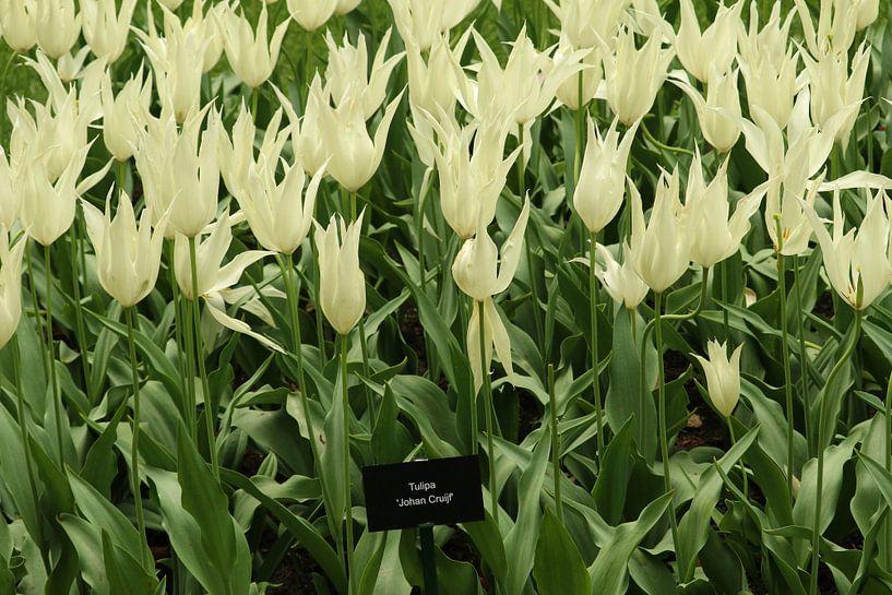 Bloemen die mooi in bloei staan van Jennifer Hendriks