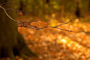Herfstbladeren in De Horsten in Wassenaar