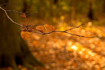Herfstbladeren in De Horsten in Wassenaar van