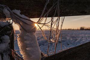 Nederlandse Winter