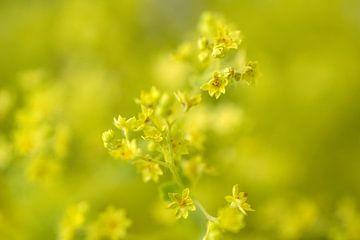 gelbe Blumen von Ellen Snoek