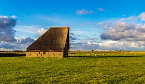 Schapenboet met schapen-  landschap Texel