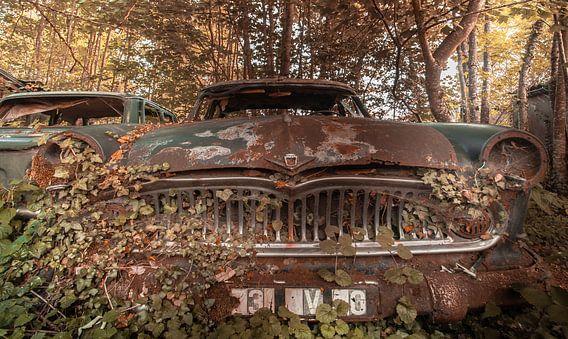 Car in the woods van Olivier Van Cauwelaert