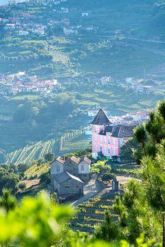 Roze Huis tussen Wijngaarden: Douro-vallei, Portugal van The Book of Wandering