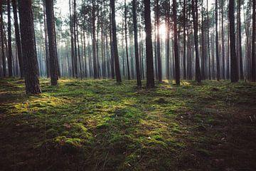 Rayons de soleil dans la forêt sur Skyze Photography by André Stein
