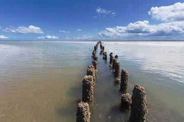 Mer des Wadden, les Pays-Bas. sur