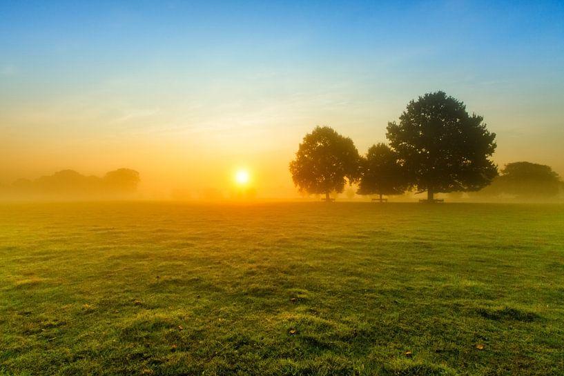 Dutch landscape with rising sun. Photo taken in Amelisweerd in Utrecht. sur Wout Kok