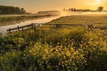 Mooie wilde gele bloemen op een grasakker in Nederland tijdens zonsopkomst van Anges van der Logt