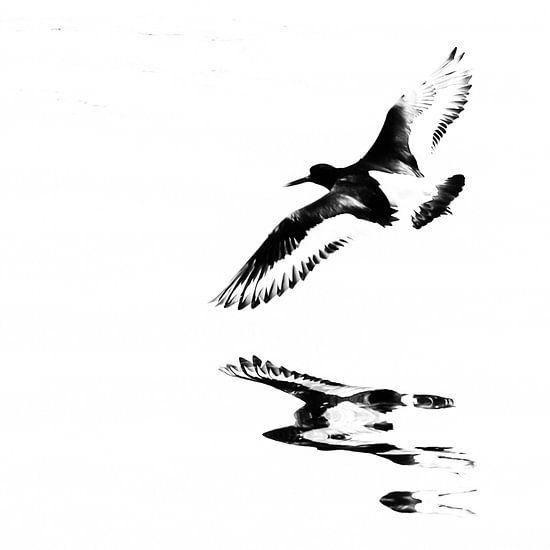 Scholekster in de vlucht boven het water (vierkant) van Fotografie Jeronimo