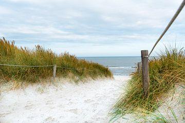 Der Weg zum Meer von Hannes Cmarits