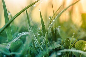 Dauwdruppels op het gras van Yvonne van Leeuwen