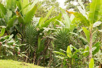 forêt tropicale Equateur #3 sur Hanneke Bantje