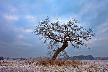 Winter, Niederlande von Peter Bolman