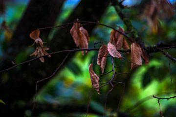 Concept herfst : Bladeren van