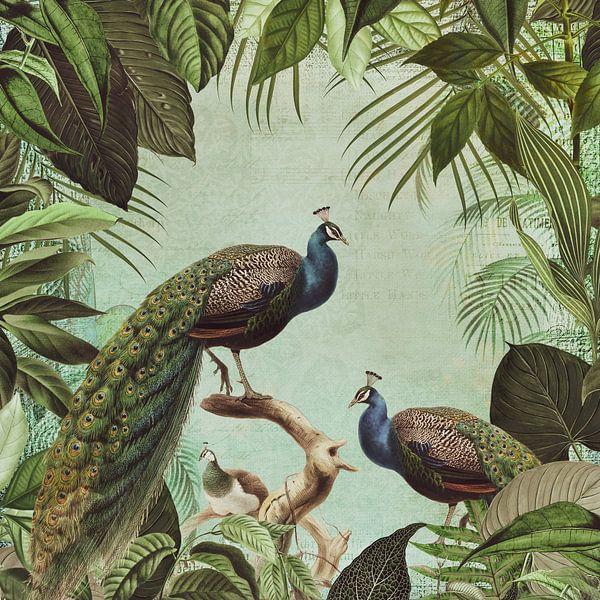 Peacock in Paradise van Andrea Haase