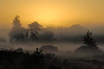 Ochtend Licht van Willem van Leuveren Fotografie