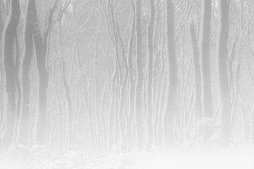 White Forest van jowan iven