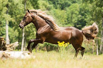 Paard in een groene omgeving sur Yvette Baur