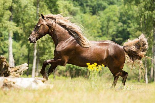 Paard in een groene omgeving van