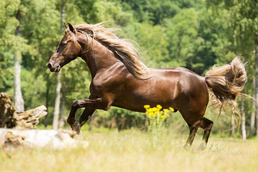 Paard in een groene omgeving van Yvette Baur