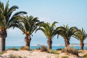 Palmbomen op het strand in Spanje