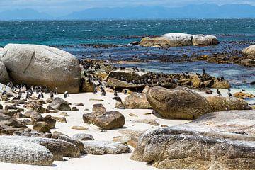 Boulders Beach, Zuid-Afrika van Peter Leenen