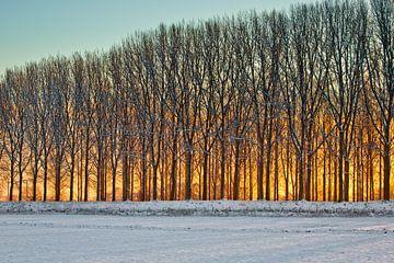 Winter in Nederland bij zonsopkomst van Andy Van Tilborg