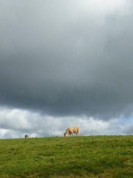 Ierse koe van Floor van der Boon