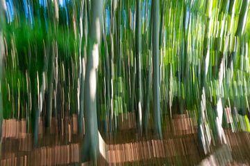 Wald aus alten Buchen von Stephan Schulz