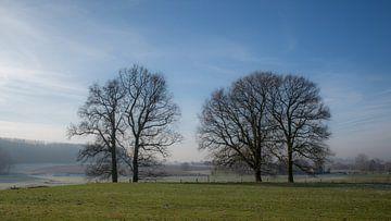 Winterlicht Park Ter Rijst - Heikruis van Ronald De Neve