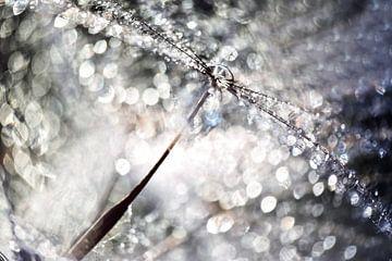 Pusteblume Kristall Glitzer von Julia Delgado