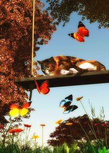 Een Amerikaanse korthaar kat kijkt naar vlinders