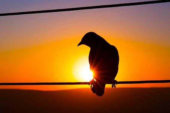 Zonsondergang Silhouet Afrikaanse Vogel van Dexter Reijsmeijer