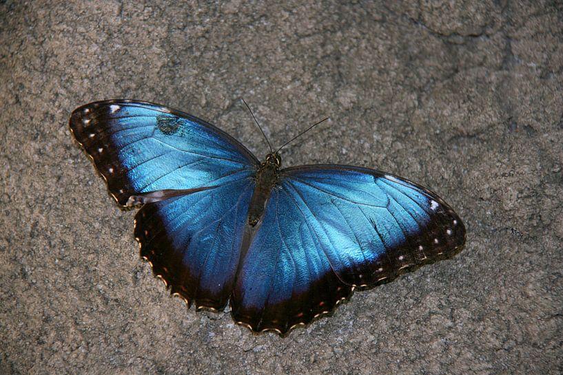 Vlinder in de vlindertuin van Diergaarde Blijdorp 4 van Toekie -Art