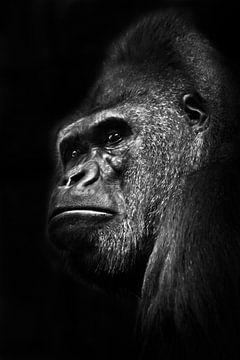 Ein kräftiger männlicher Gorilla mit dicken Lippen sieht im Profil auf einem schwarzen Hintergrund u von Michael Semenov