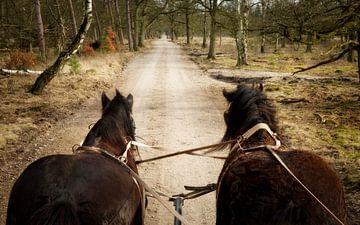 Belgische Trekpaarden voor de huifkar von Sran Vld Fotografie