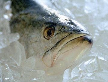 Vis op ijs van ku nst