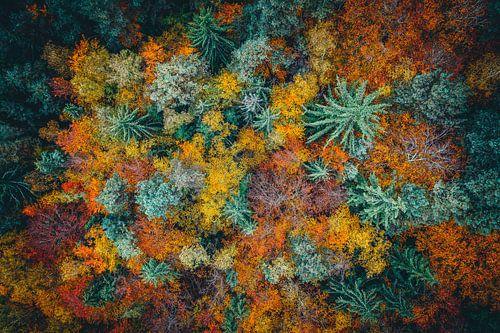 Wald im Herbst Luftaufnahme