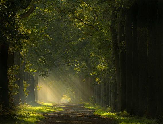 Pad naar het licht in de Wouwse Plantage