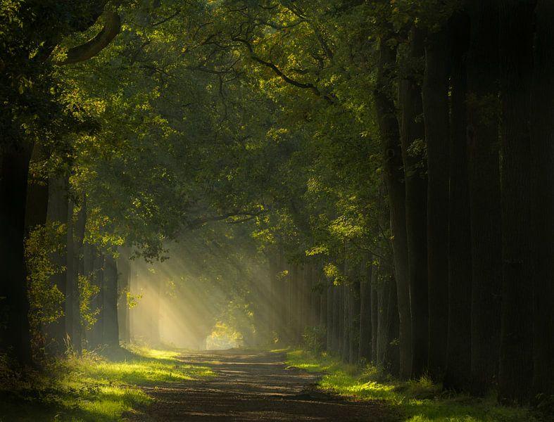 Pad naar het licht in de Wouwse Plantage van Jos Pannekoek