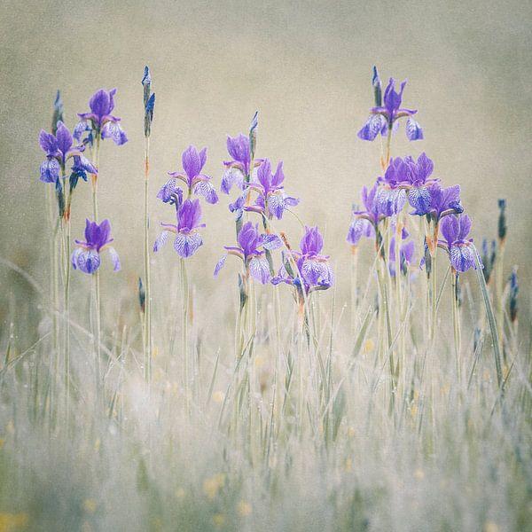 lily meadow van Daniela Beyer