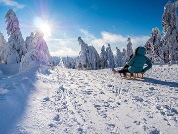 Faire du toboggan dans les montagnes de minerai en hiver sur Animaflora PicsStock